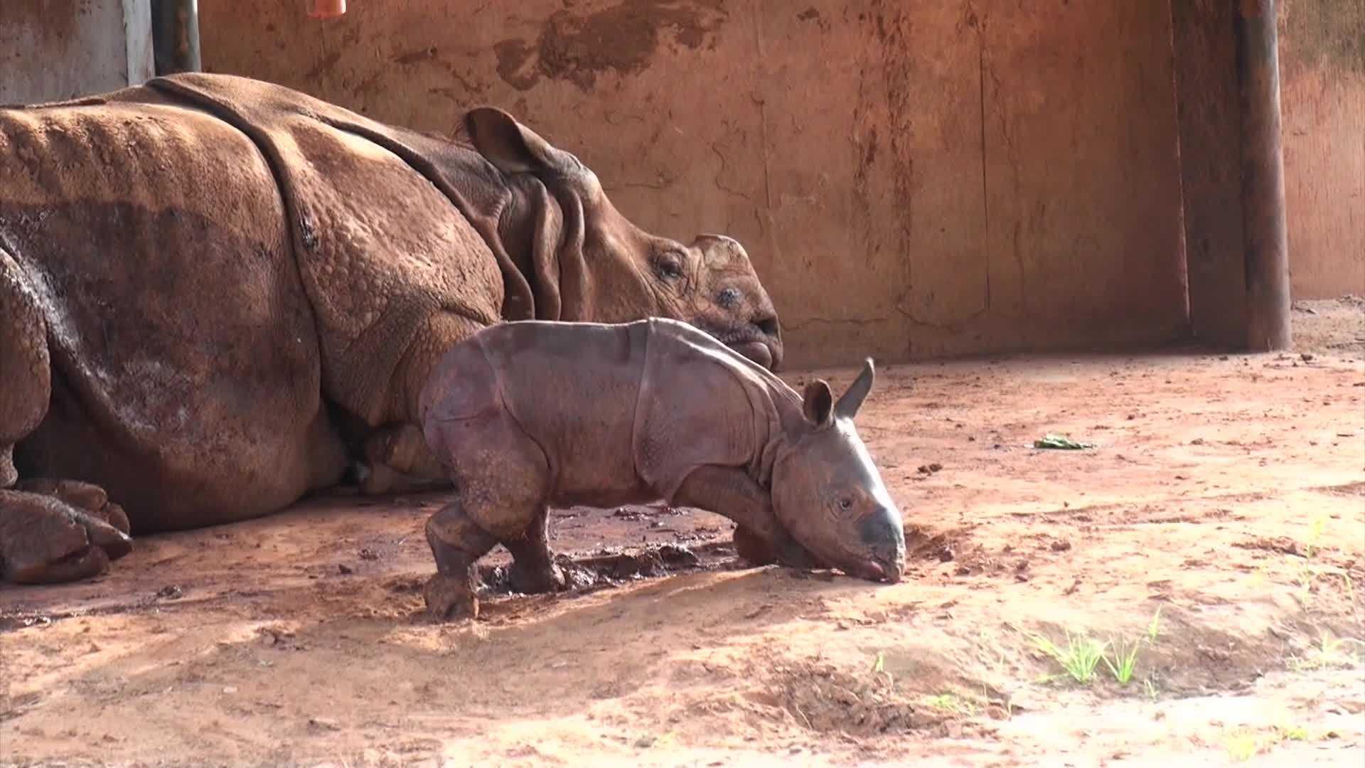 The Oklahoma City Zoo has welcomed a baby rhino.