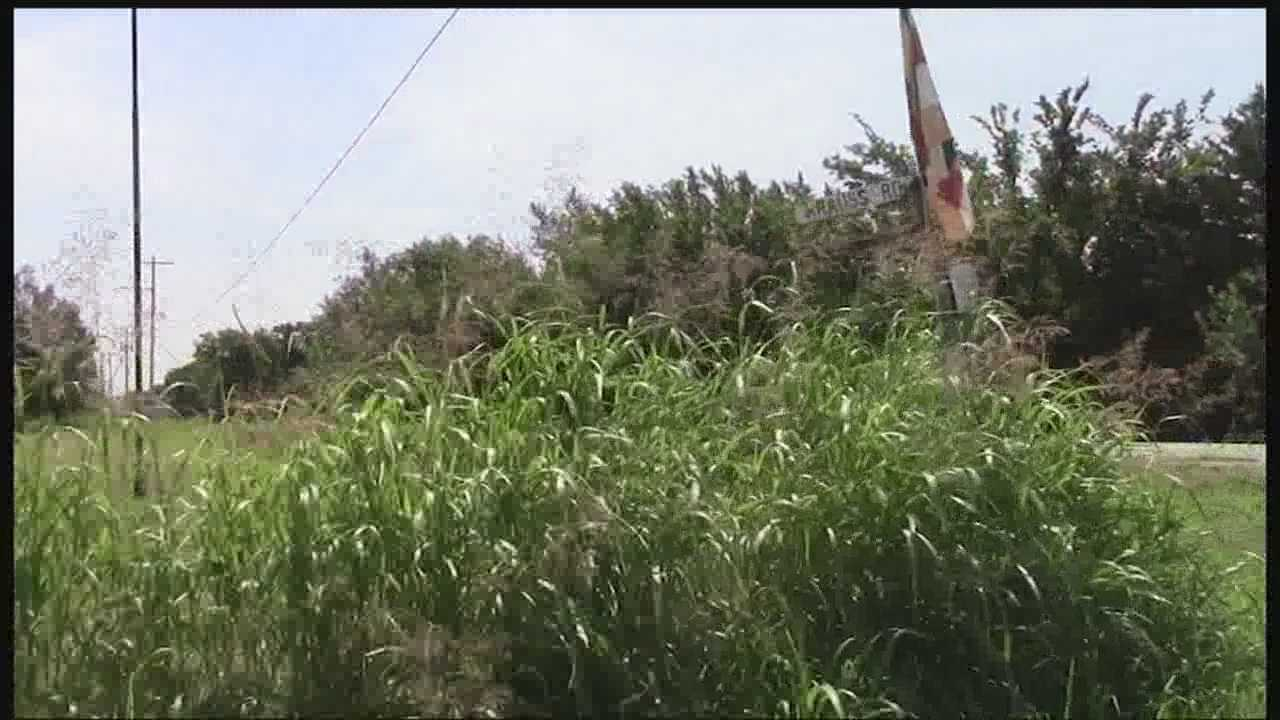 Overgrowth due to recent rains is causing dangerous driving conditions in part of the city.