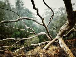 Trees - 1st place: © AARON PIKE - San Francisco - CA United States