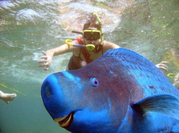 The Blue Parrotfish: This funny fish is known as a Blue Parrotfish and they average 30-75 cm in length. Some can grow up to 1.2m probably because the parrotfish spends up to 80% of its time looking for food. Read more: http://www.viralnova.com/unique-animals/#zE92Dh2k2bRQaxo5.99