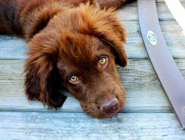 Aug. 26: National Dog Day