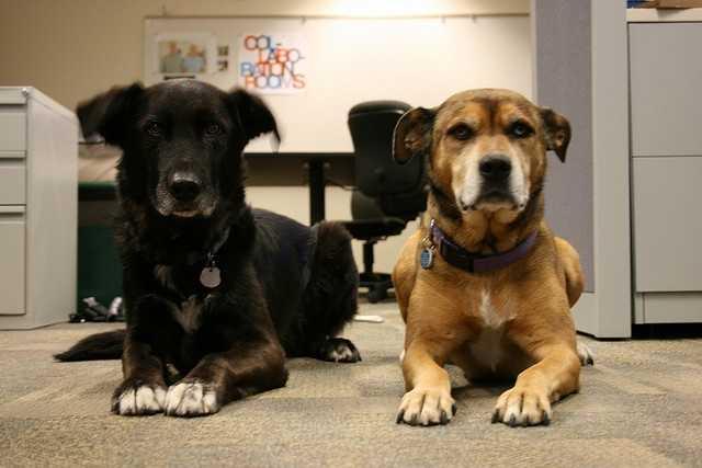 Aug. 5: Work like a dog day
