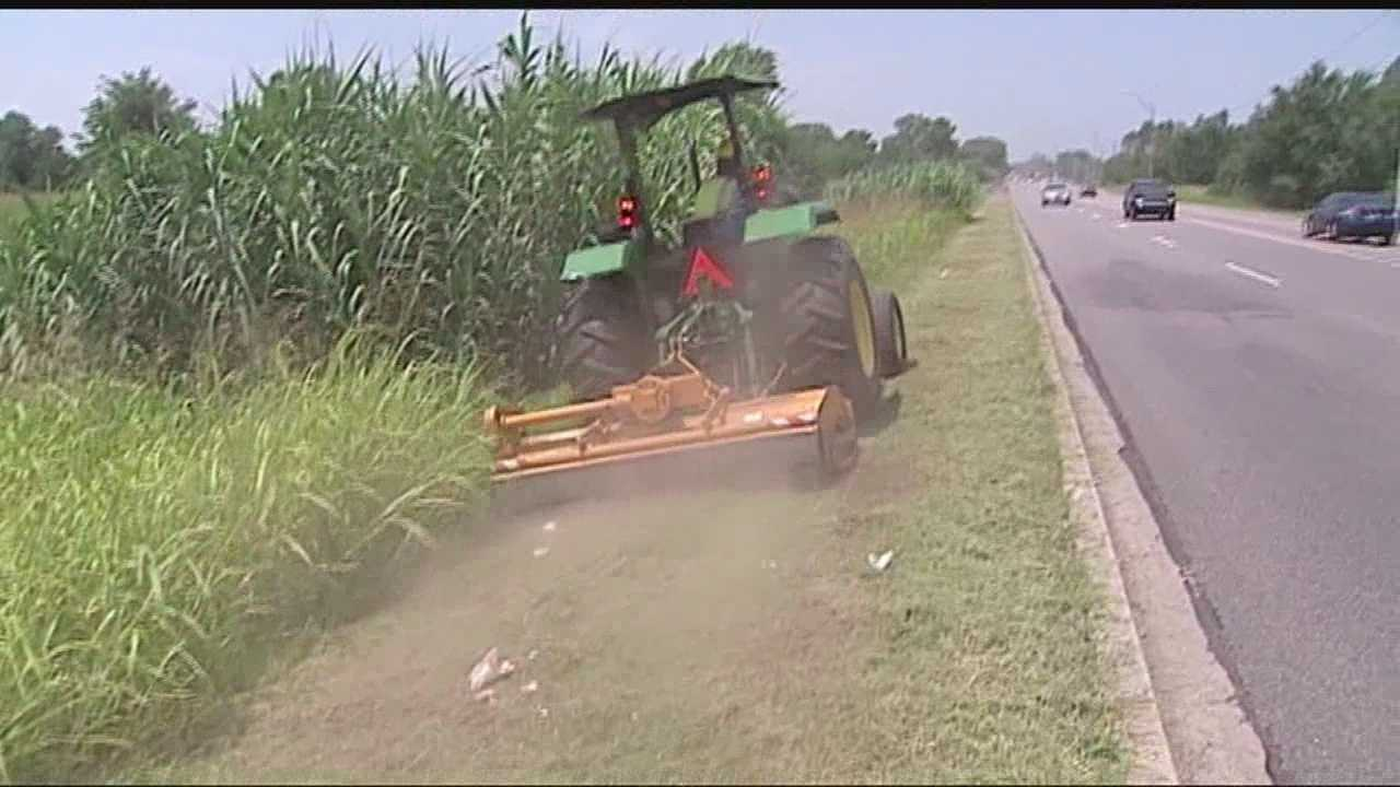 Tall grass causing problems for allergy sufferers