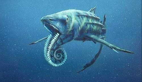 Photo from neatorama.comWhorl shark - Although we know little about it, the whorl shark is a truly strange fish that lived 280-225 million years ago. The whorl shark's distinction is a spiral of teeth it left behind. Modern sharks continue to grow teeth throughout their lives and shed old teeth. Ancient sharks grew new teeth, but kept the old teeth as well. In some species, old teeth migrated to the face to make room for teeth in the jaw. In the whorl shark, old teeth were just rotated around. But where in the shark were these teeth? Full fossils have not yet been found, so some scientists believe the spiral teeth were in the front of lower jaw as shown here.