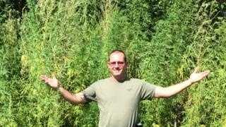 Marijuana found