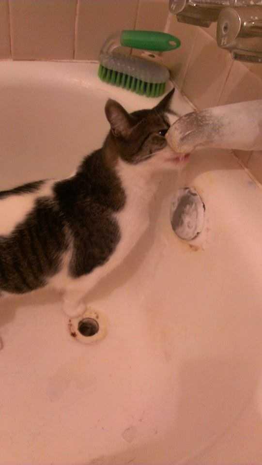 A resourceful cat