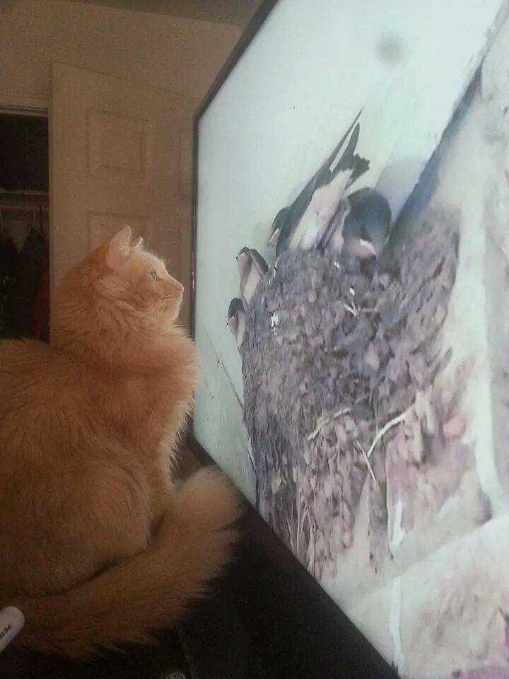 Gordon taking in some cat videos