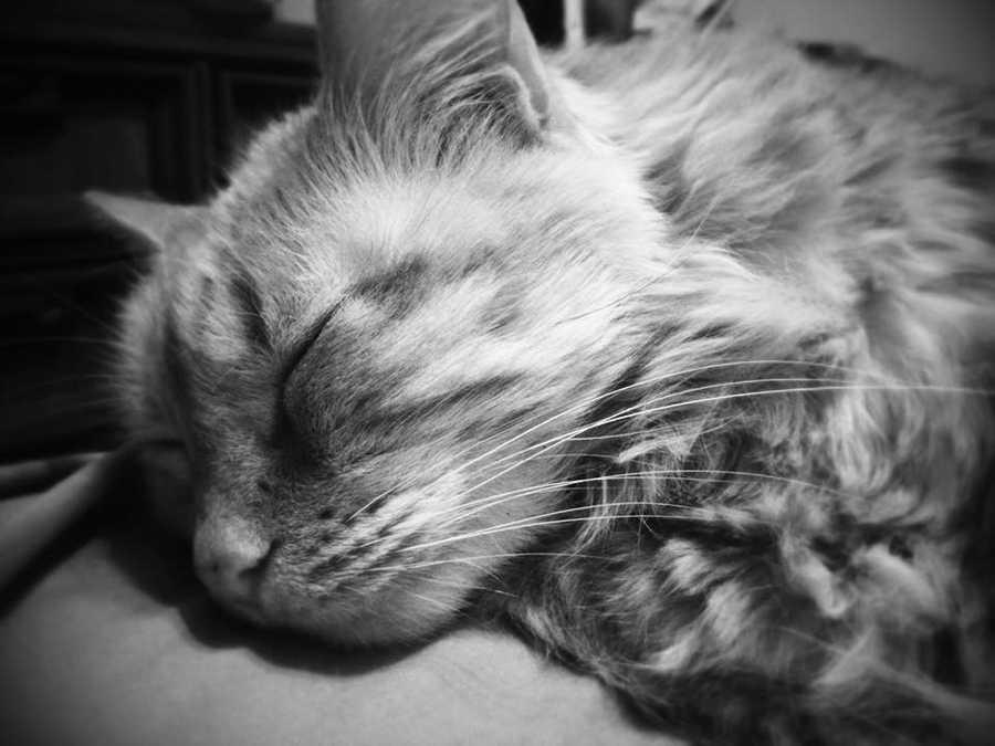 Sleepy Cena