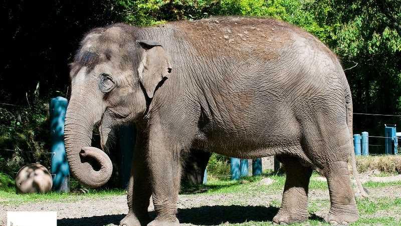 Photo courtesy Woodland Park Zoo
