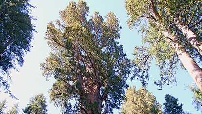 3. General Sherman tree: Located in Sequoia National Park in California, General Sherman is the largest, by volume, living single-stem tree in the world. It is estimated to be between 2,300 and 2,700 years old. Photo courtesy Labete - Flickr