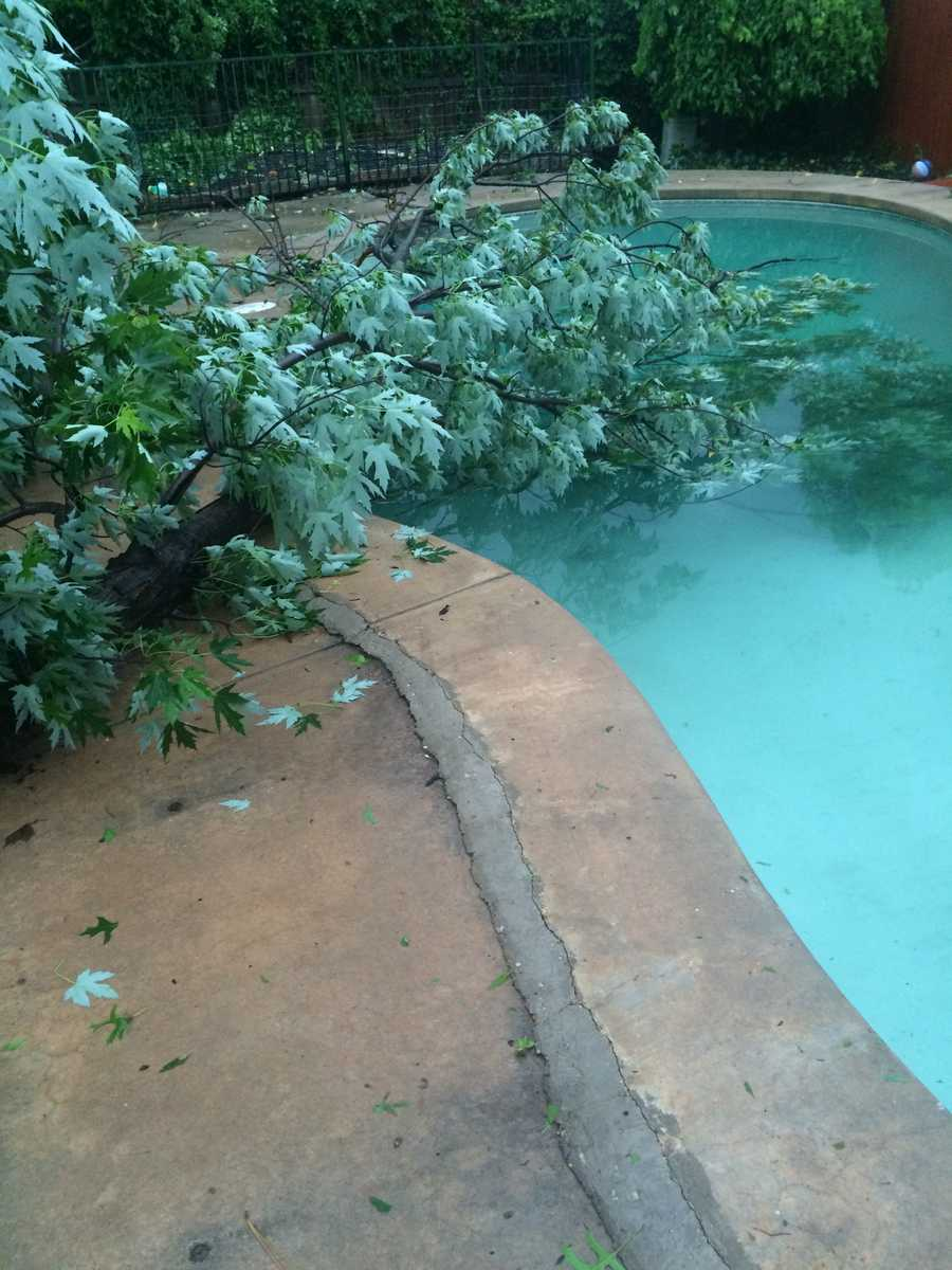 My tree is in my pool. Location: Norman