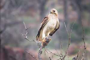Hawks can also be seen at the refuge. Photo from Flickr courtesy Larry Smith.