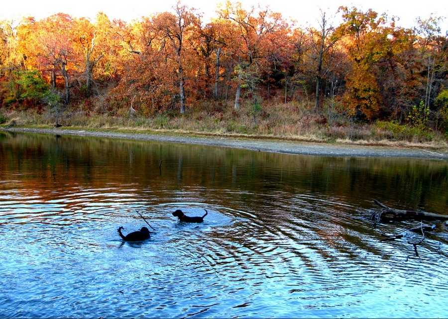 Take the dogs for a hike at Turkey Mountain. Photo from Flickr by oakleyoriginals.