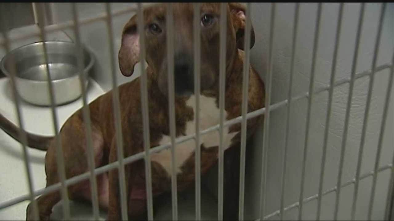 Some dogs that are sitting on death row are running out of options in the over-populated Edmond Animal Shelter.