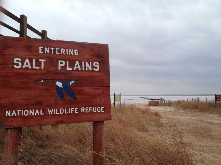 Great Salt Plains State Park near Jet features many activities, including hiking, swimming, digging, bird-watching and more.