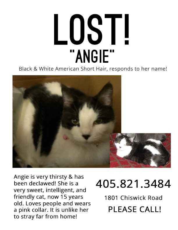 LOST: Angie has been declawed. She's 15 years old. Loves people and wears a pink collar. Lost from 1801 Chiswick Road.