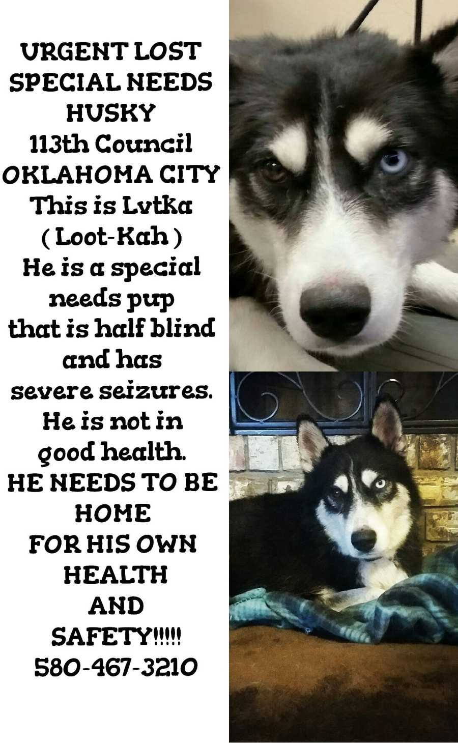 LOST: Lvtka was lost near 113th and Council. He is a special needs puppy who needs medication.