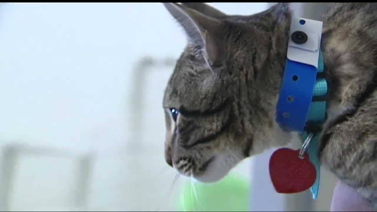 OKC Animal Shelter looks for homes for 229 cats brought to shelter