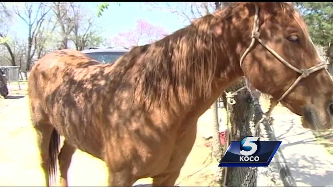 A man and horse were shot during drive-by shooting Thursday night in northeast Oklahoma City.