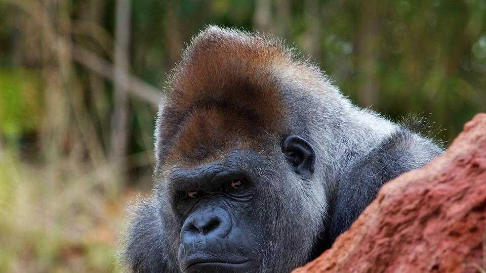 Photo provided by the Oklahoma City Zoo