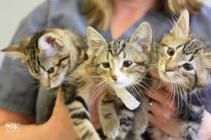 Several Oklahoma kittens born without eyelids are set to receive medical treatment.