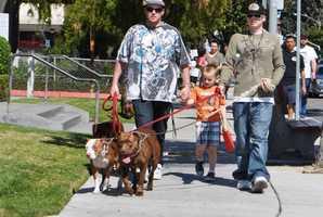 Pit bulls are seen walking in Salinas.