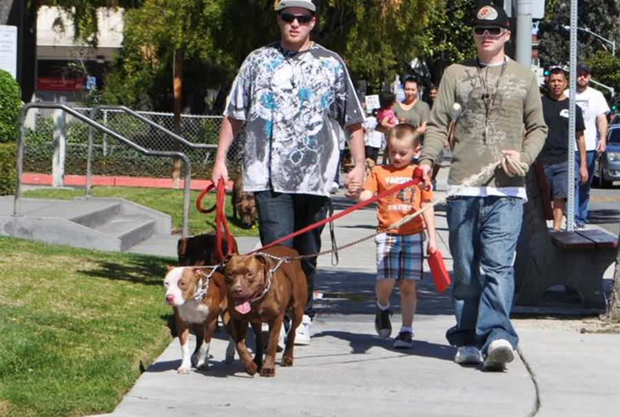 Pit bulls are seen walking in Salinas.