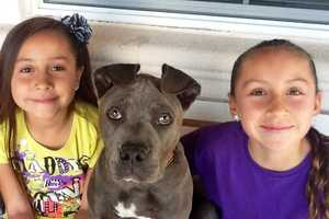 Pit bull Jeter Martinez lives with Paulena Montague and family.