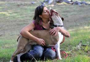 """Stacy Sanders, of Salinas, loves her 4-year-old pit bull Marvin.""""Marvin was adopted from the SPCA for Monterey County in August of 2010 and is the sweetest, most loving pit bull,"""" Sanders said. """"He gets along great with other dogs and loves people.""""""""Marvin is a prime example of what a pit bull should be when placed in a loving, caring home and treated like part of the family. Marvin also helps me when I suffer from multiple sclerosis symptoms and stays by my side 100 percent of the time during relapses. I could not imagine my life without him!"""""""