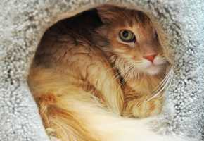 """On July 24, SPCA officers searched two Seaside properties on Noche Buena Street and Wanda Avenue and found a heartbreaking scene.""""No live kittens were found,"""" SPCA spokeswoman Beth Brookhouser said."""