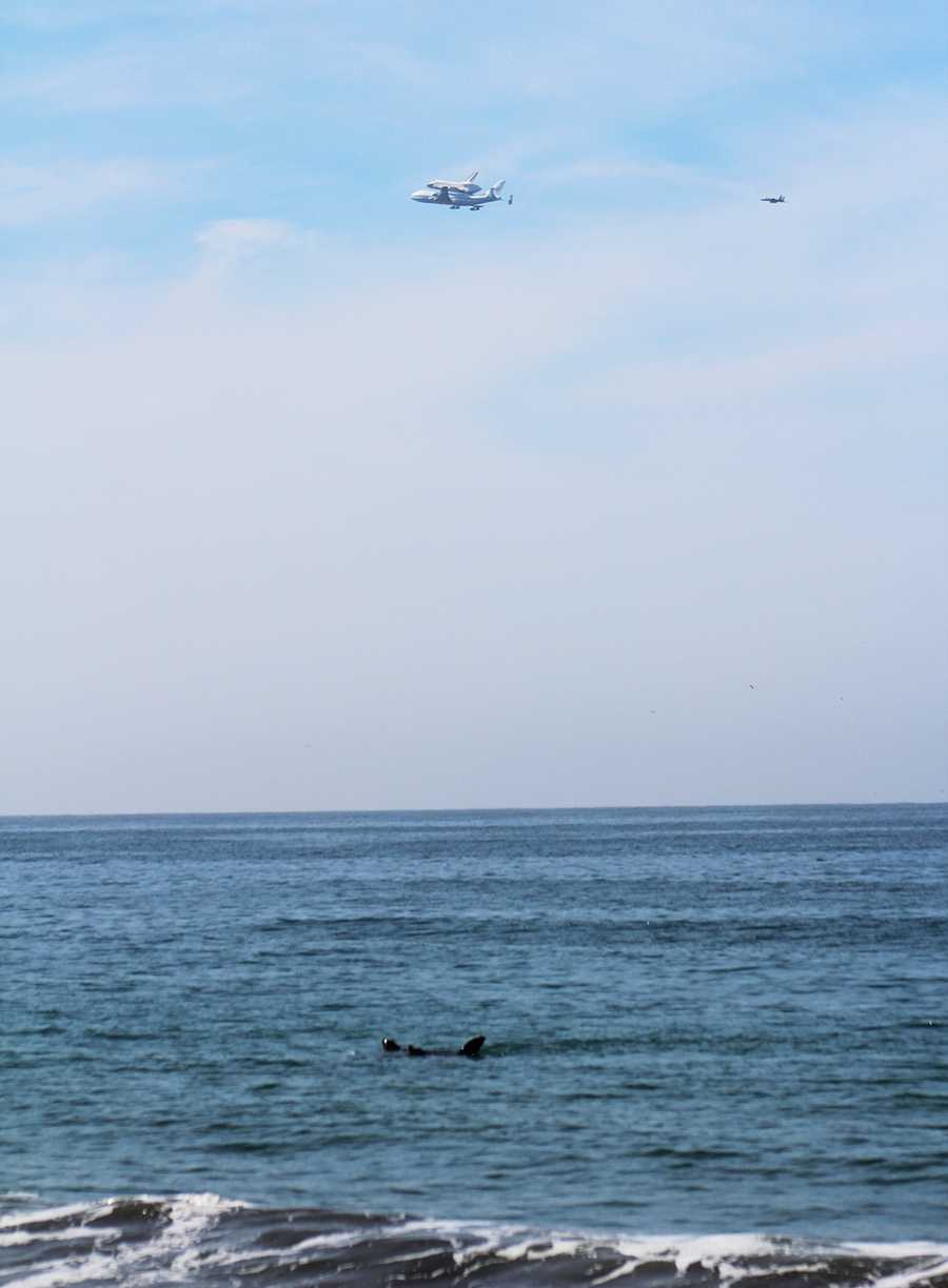 Valerie Freer saw these two sea lions looking up at Endeavor as it soared over a beach in Aptos.