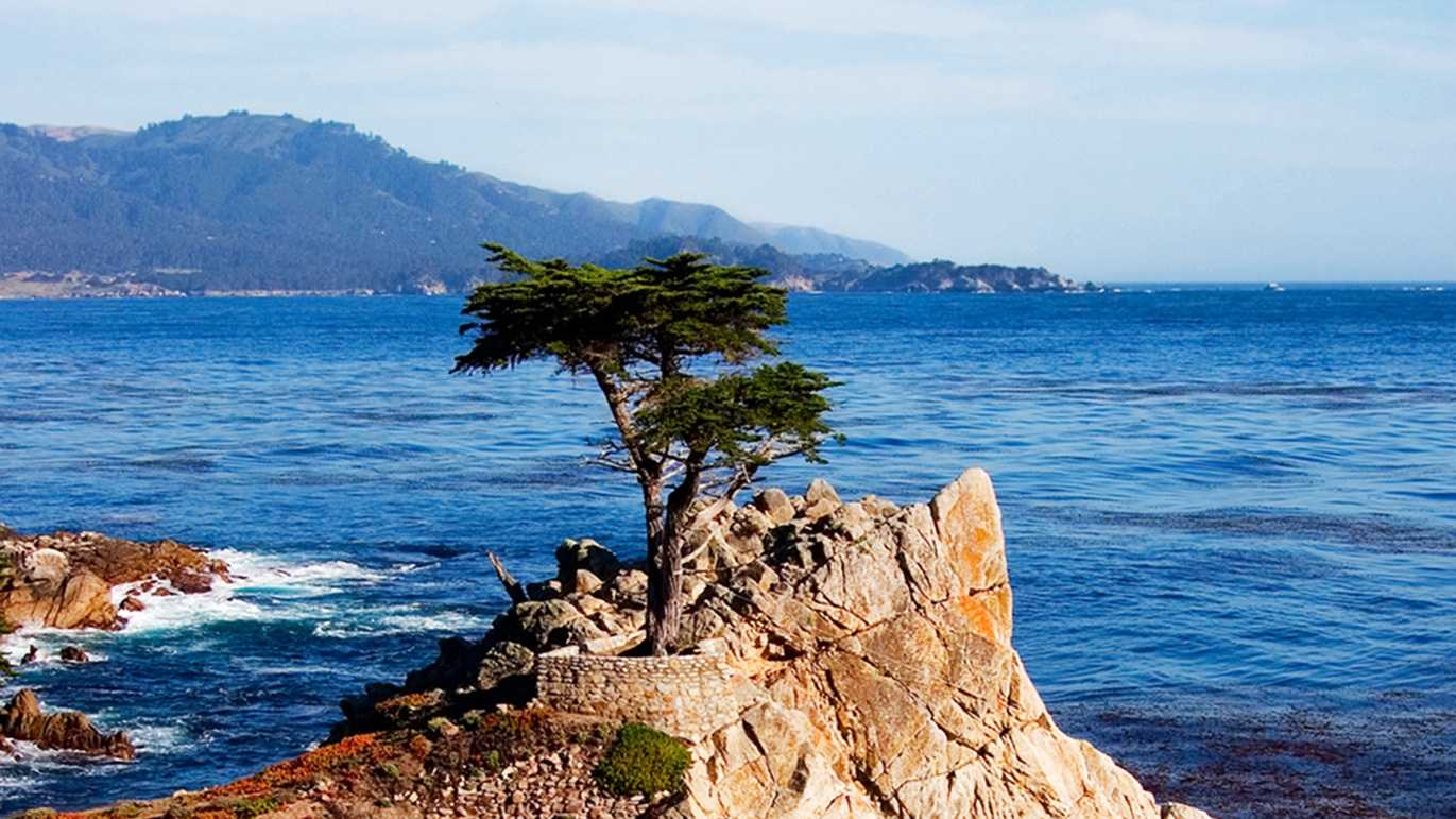 A Monterey cypress tree is seen perched over the ocean in Pebble Beach.