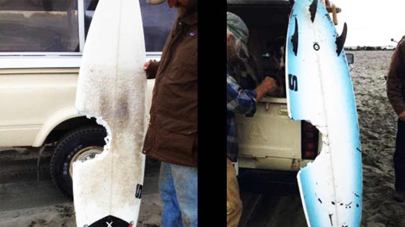 The front and back of Scott Stephens's surfboard is shown after he survived a shark attack.