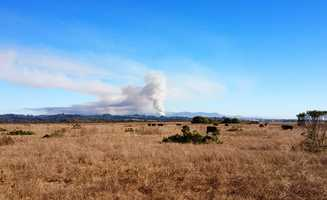 Cows grazing near Elkhorn Slough did not seem bothered by the far away fire.