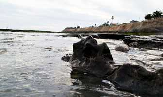 """Removing bones that are millions of years old from rock in aninter-tidalzone takes a lot of careful work and requires """"significant excavation,"""" Griggs said.Another Pliocene-erawhale was already excavated from the same stretch of coastline in recent years."""