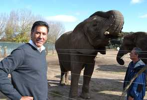 KSBW reporter Felix Cortez meets an elephant at Vision Quest Ranch. (Nov. 21, 2012)