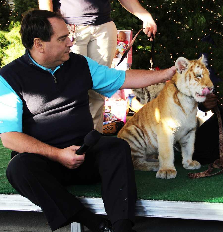 Dan Green pets a tiger cub from Wild Things at KSBW's Salinas television studio.