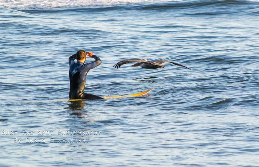 #10: The surfer and the pelicanSurfer Tyler Fox gazes at a pelican swooping by in Santa Cruz. Photo by Chris Elmenhurst