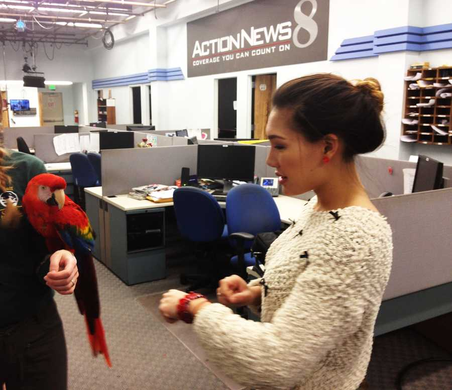 KSBW Pet Of The Week: Jan. 4, 2013Producer Jessica Vo makes a friend with this beautiful Scarlet Macaw, available for adoption through the Monterey County SPCA!