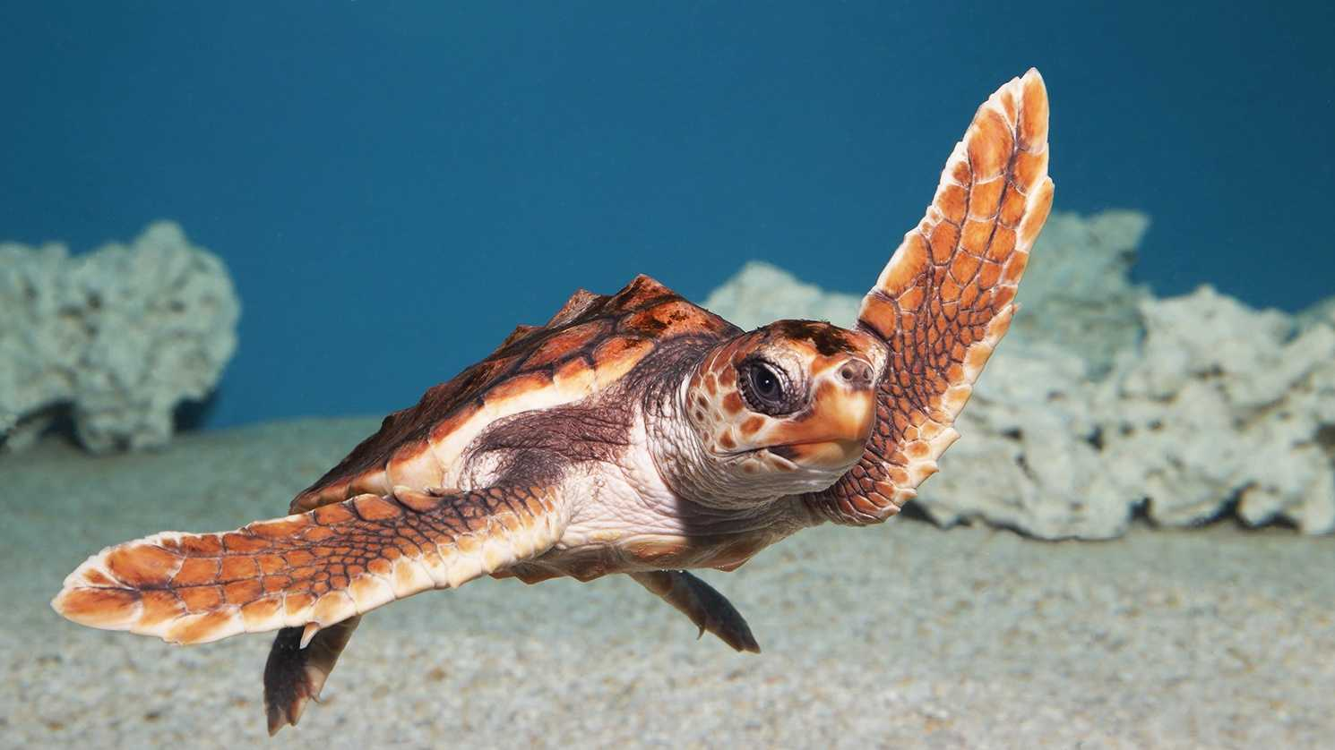 Photo byMonterey Bay Aquarium / Randy Wilder