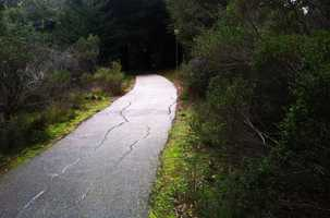 Triplett said she was violently raped by a stranger here on this walking path at UC Santa Cruz on Feb. 17, police said. She told police that she had been walking around UC Santa Cruz's campus looking for banana slugs when a man suddenly lunged at her. Banana slugs are the official mascots of the university.