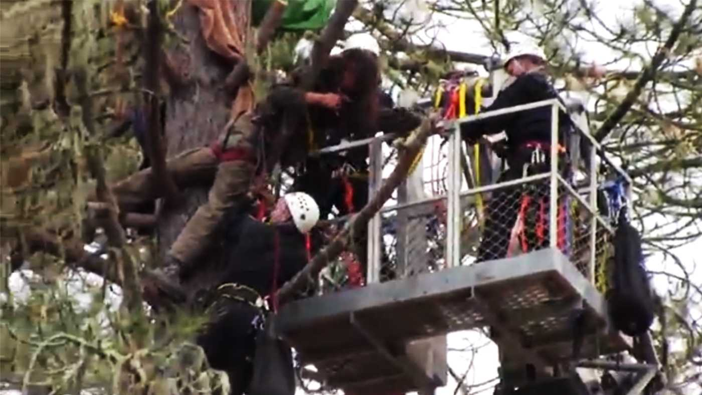 A tree sitter is arrested Tuesday.