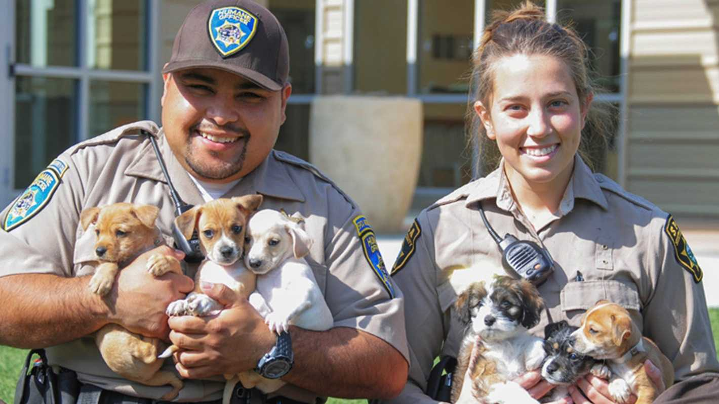 The Monterey County SPCA named these six rescued puppies Charlie, Linus, Patty, Violet, Lucy, and Sally.
