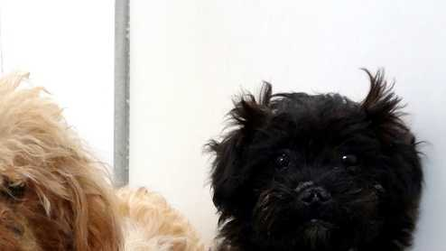 These dogs were found in Ilagene Quaglia's Monterey house.