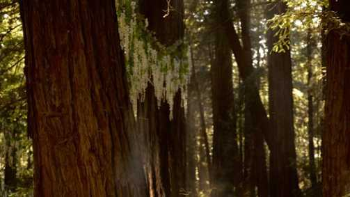 Alexandra and Sean Parker's official wedding photo uses Big Sur's redwood trees as a dramatic natural backdrop.