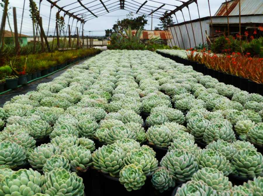 Plant designers at Succulent Gardens in Castroville built a giant, living globe out of succulent plants this month.