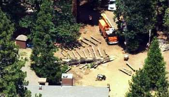 Rittenberg was killed and four others injured when this large tree spontaneously toppled over and fell on a group of summer camp staff members sitting around a campfire circle.