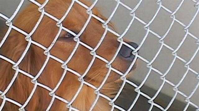 The Salinas Animal Shelter said some animals may have to be put to sleep if they don't find homes soon.