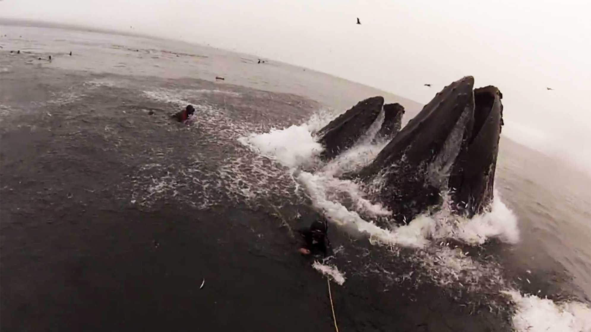 whalessss.jpg