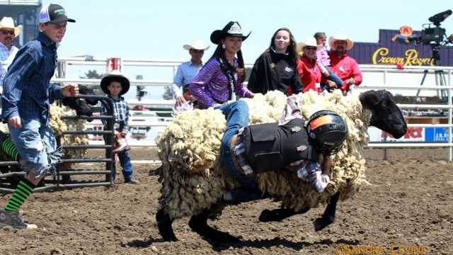 Mutton busting!